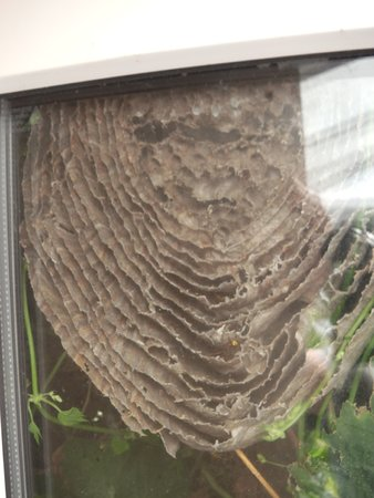 Wasp Nest with Wasps\\n\\n18/08/2020 19:01